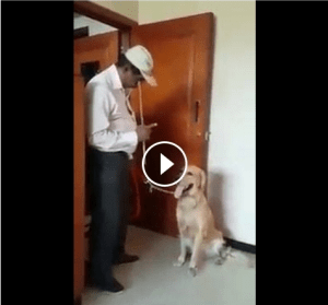 [Funny Video] Dog Solve mathematics with his teacher